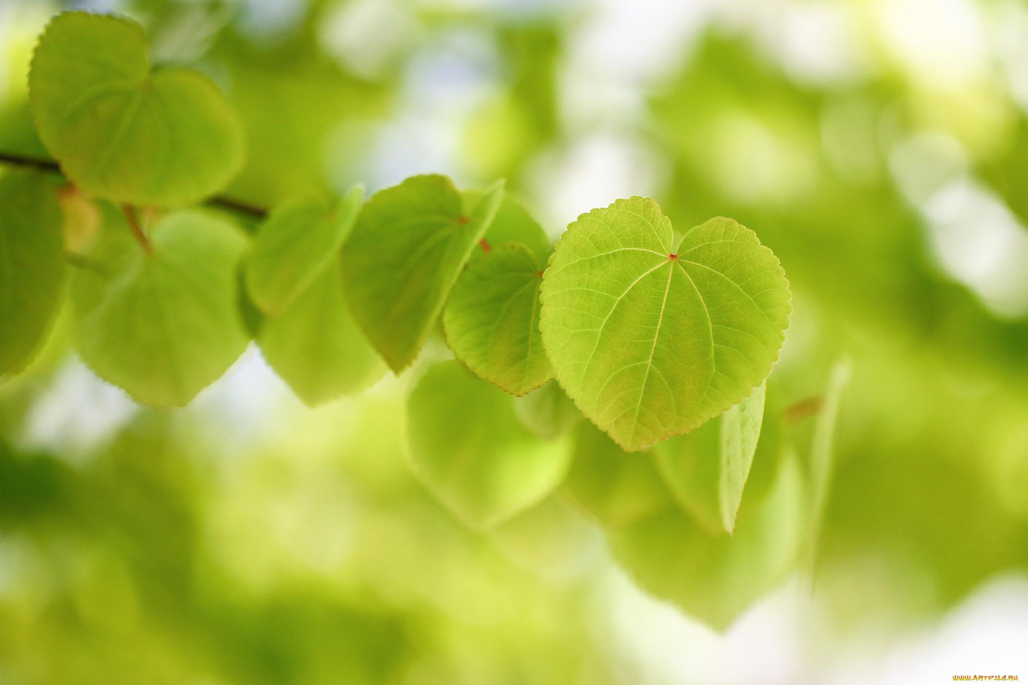 природа листья весна  № 3899928 без смс