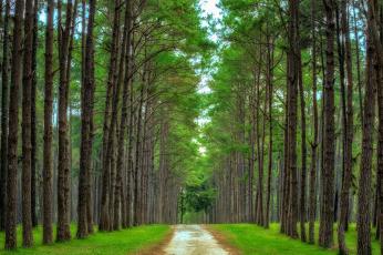 Картинка природа дороги тракт лес