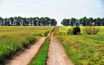 обоя природа, дороги, полевая, деревья, дорога, поле