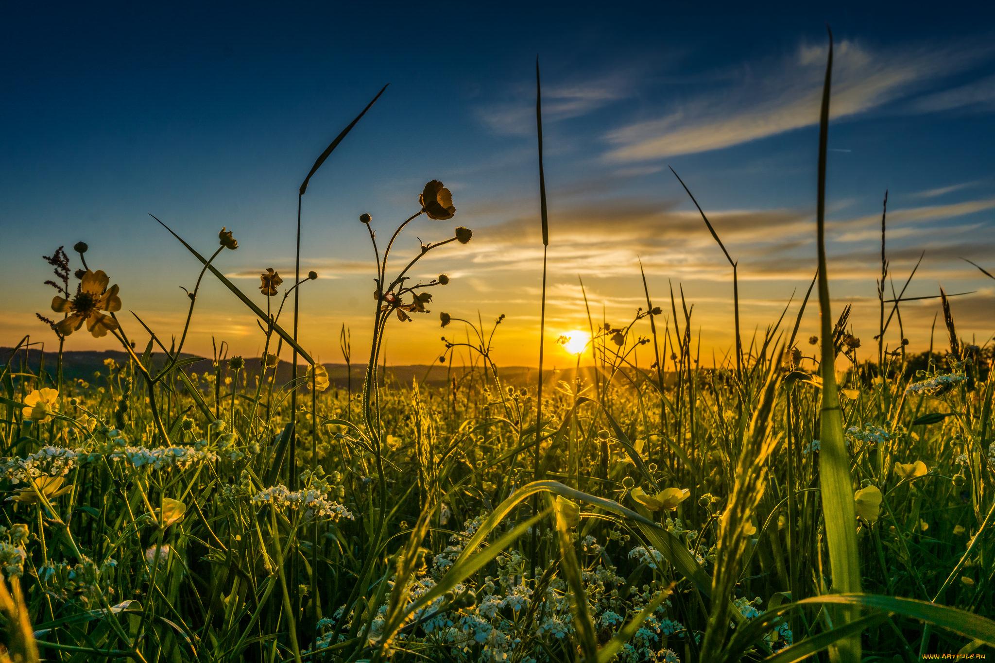 закат небо полевые растения  № 963445 без смс