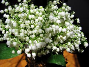 обоя цветы, ландыши, майский
