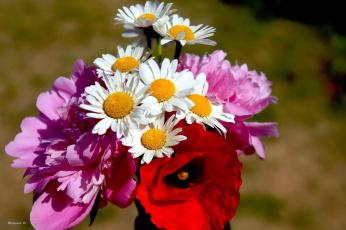 обоя цветы, разные вместе, мак, ромашки, пионы