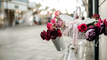 обоя цветы, розы, бутоны, корзинка