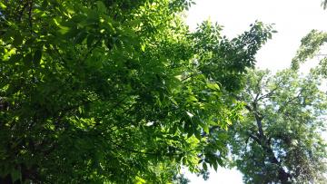 обоя природа, деревья