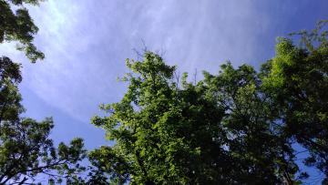 обоя природа, деревья, небо