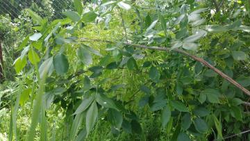 обоя природа, листья, ветка