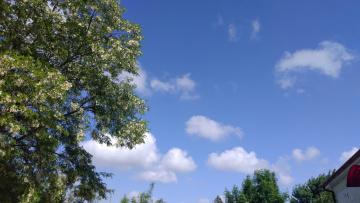 обоя природа, облака, акацыя