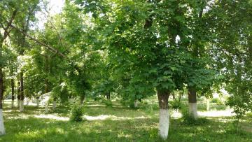 обоя природа, парк, пейзаж, май, деревья, весна