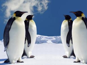 обоя животные, пингвины, снег, лед, облако, стая
