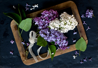 обоя цветы, сирень, ленточка, рамка