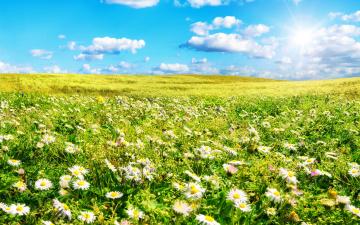 обоя цветы, ромашки, лето, поле, трава, небо, солнце, облака