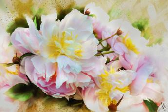 обоя рисованное, цветы, пионы, ярко, живопись, цветок, розовый, мазки, лепестки, пион, бутоны, картина, рисованные, белый