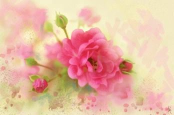 обоя рисованное, цветы, нежно, картина, рисованные, мазки, живопись, роза, розовая, лепестки, рисунок, п, имитация, акварели, цифровая, нарисованные, бутоны