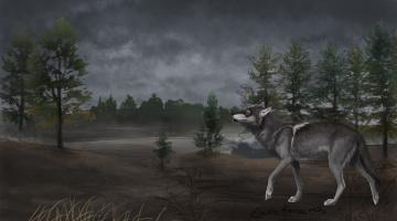 обоя рисованное, животные,  волки, фон, волк