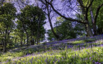 обоя природа, луга, колокольчики, трава, деревья