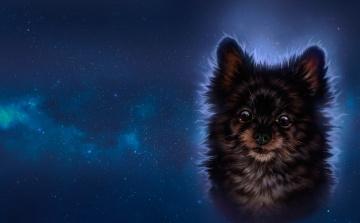 обоя рисованное, животные,  собаки, арт, звёзды, собачка, ночь
