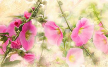 обоя рисованное, цветы, имитация, акварели, нарисованные, картина, живопись, рисованные, нежно, мазки, розовые, цифровая, мальвы