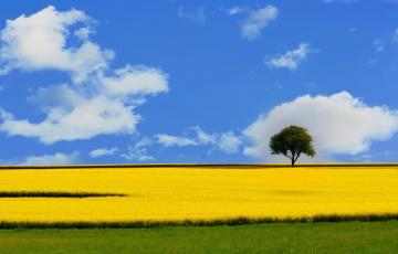 Картинка природа поля пейзаж