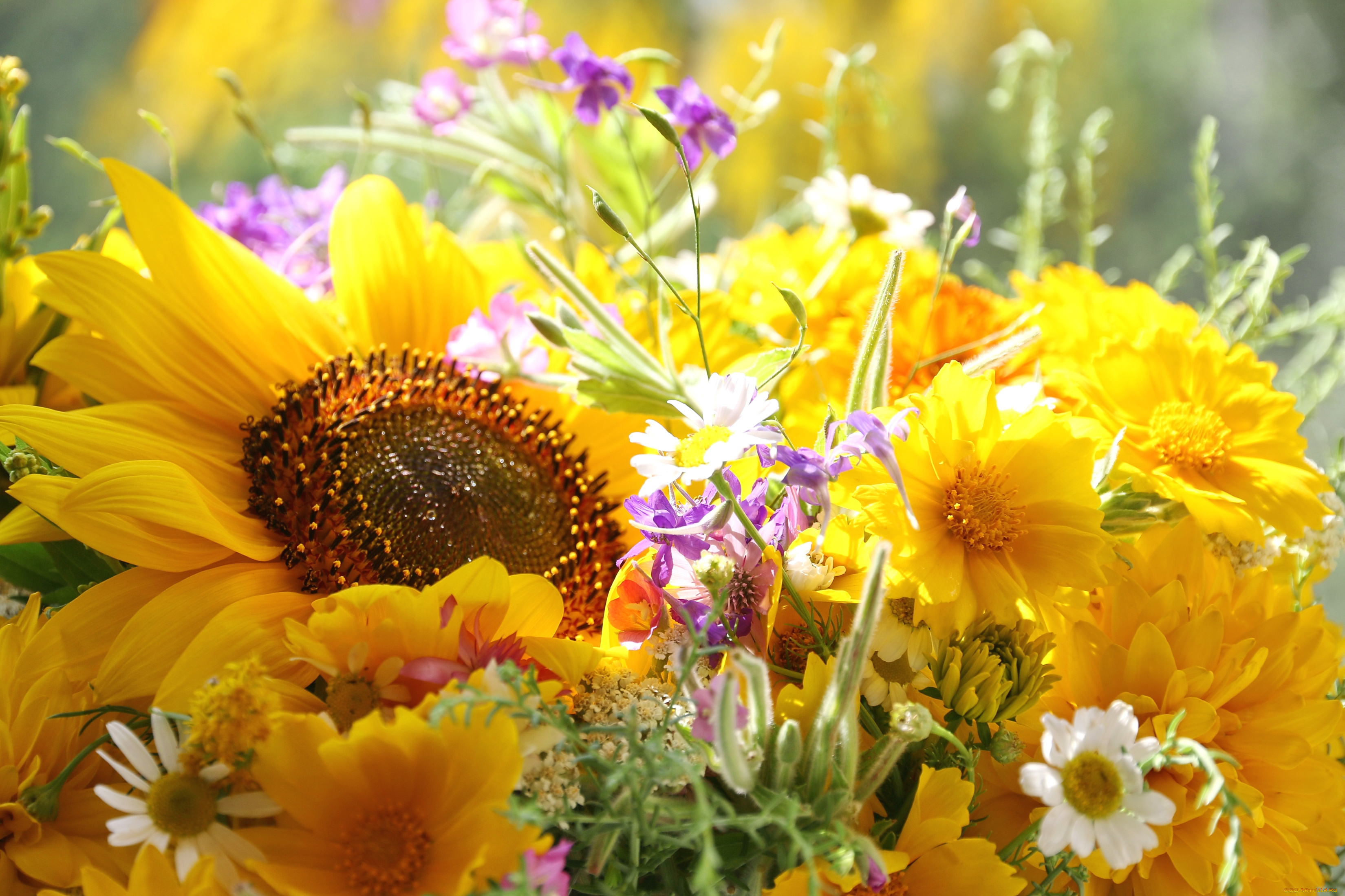 Открытки солнечный цветок