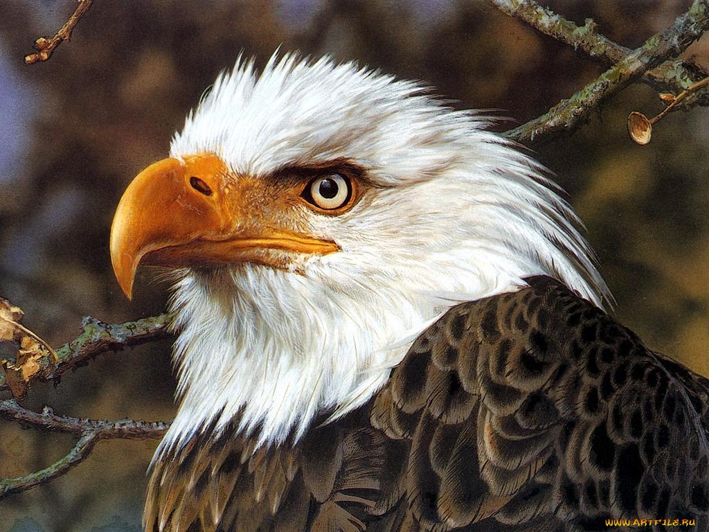 Картинки красивых животных и птиц, надписями картинки открытки