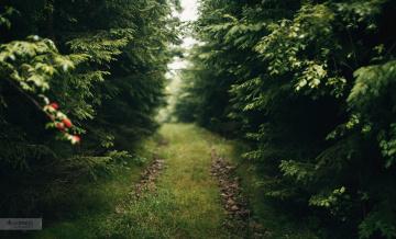 Картинка природа дороги ветки деревья лес парк