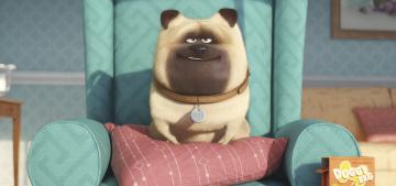 Картинка мультфильмы the+secret+life+of+pets персонаж