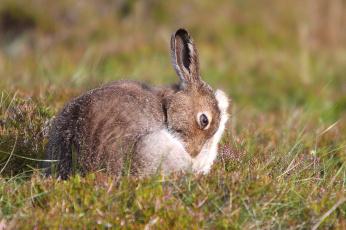обоя животные, кролики,  зайцы, поле, природа, цветы, трава, забавный, уши, заяц