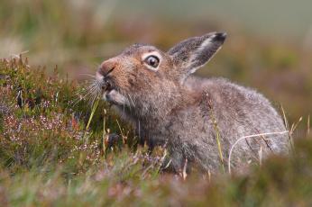обоя животные, кролики,  зайцы, природа, цветы, забавный, трава, уши, заяц, поле