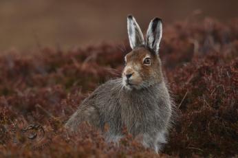 обоя животные, кролики,  зайцы, трава, поле, заяц, природа, цветы, забавный, уши