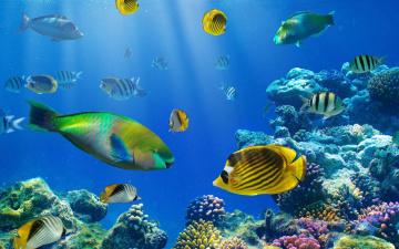 обоя животные, рыбы, кораллы, камни, рыбки