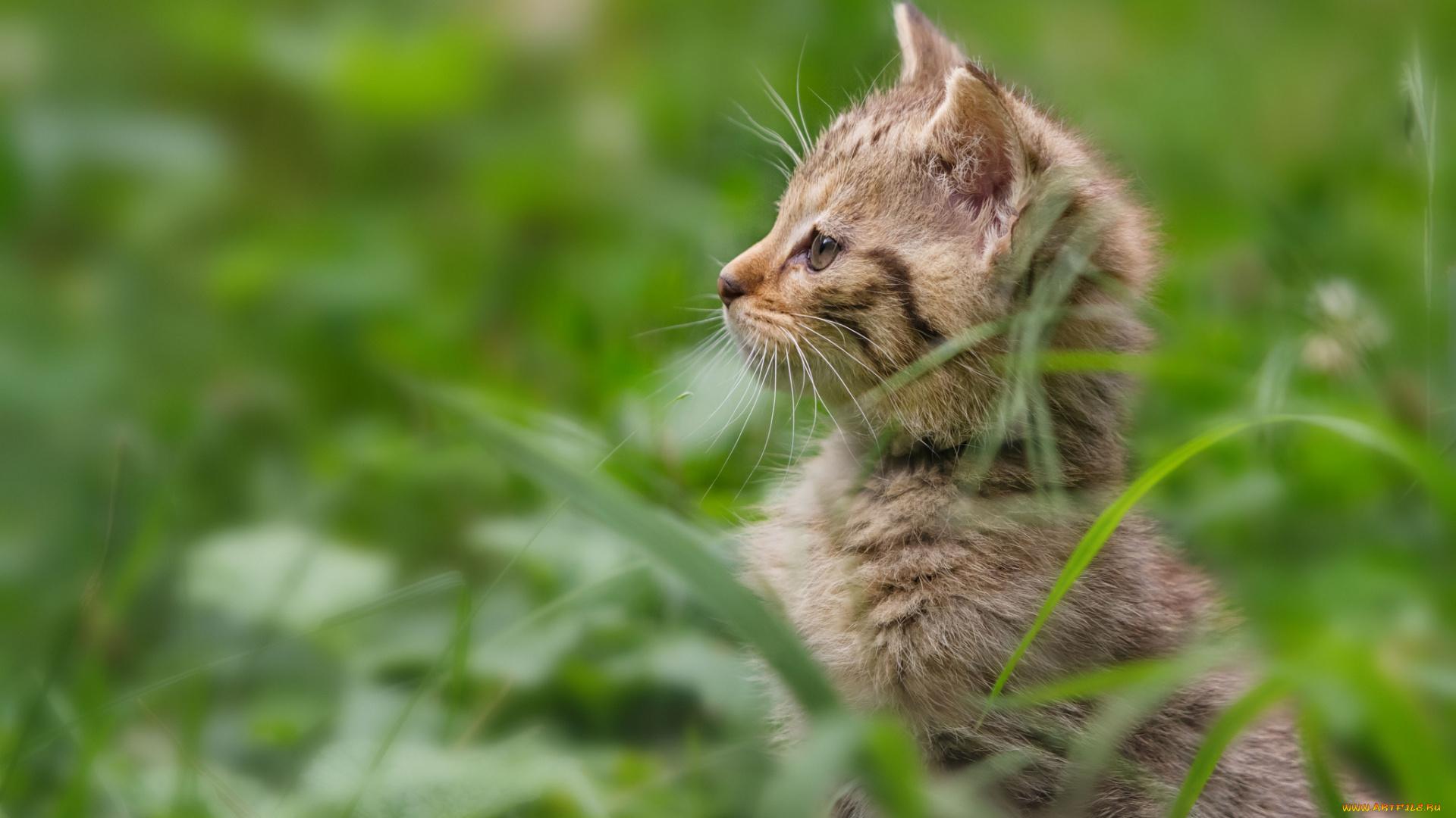Котенок на траве  № 2959599 бесплатно