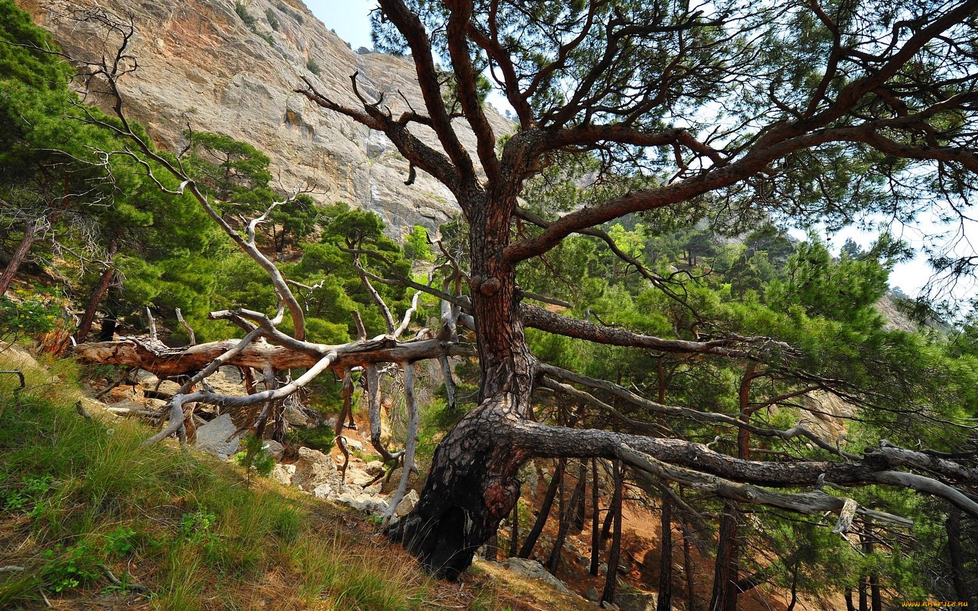 Деревья на склоне горы без смс