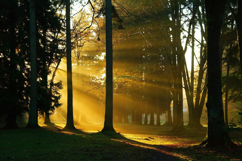 пробивающиеся лучи солнца в лесу загрузить