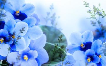 Картинка цветы фиалки ветки листики цветение листья лепестки синие