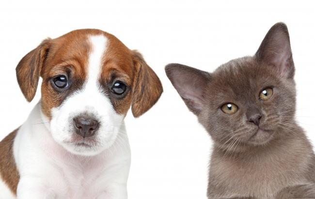 Котёнок против щенка