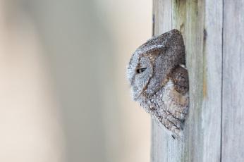 Картинка животные совы сова дупло дерево фон