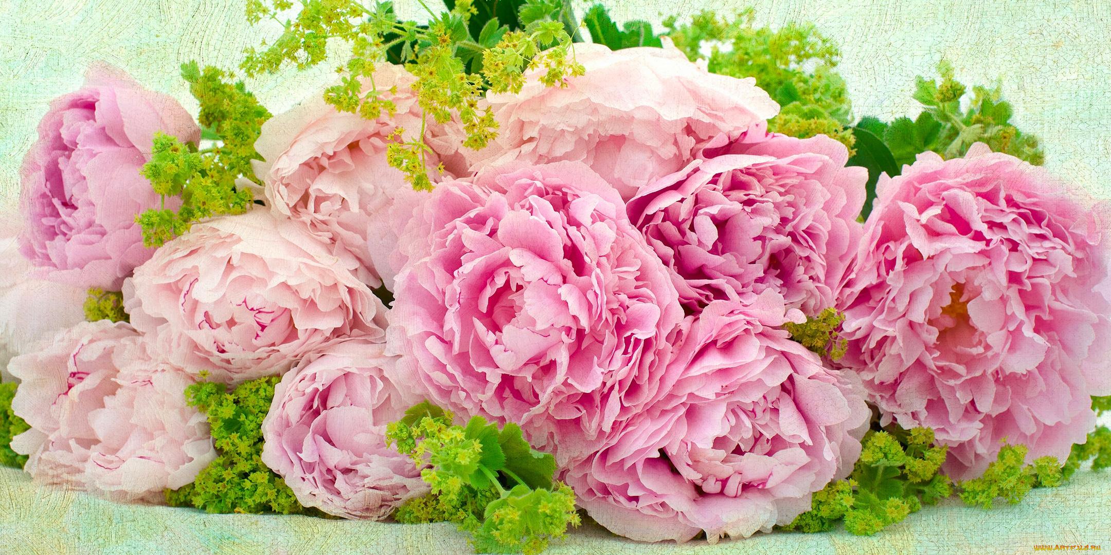 Картинки цветов пионов обои, своими руками день