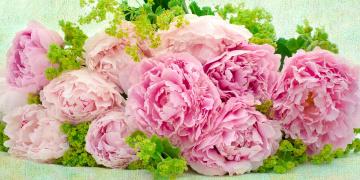 обоя цветы, пионы, букет, текстура