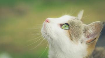 Картинка животные коты кошка мордочка взгляд фон