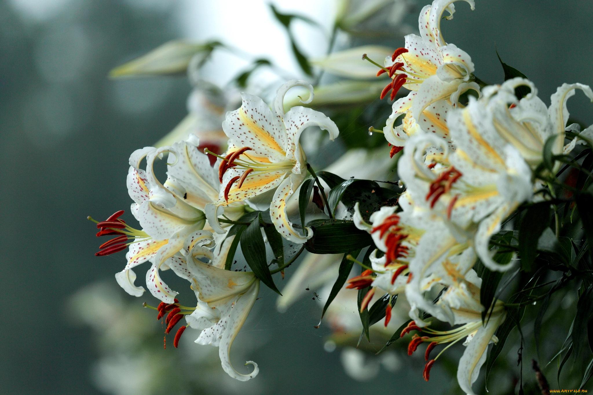 Букет пионы с розами фото логотипом
