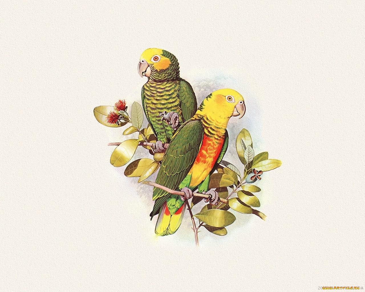 рисунок попугаев как живые дела идут