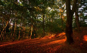 Картинка природа лес осень деревья листья