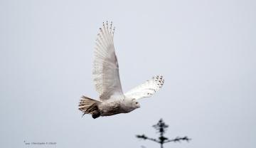 Картинка животные совы полет