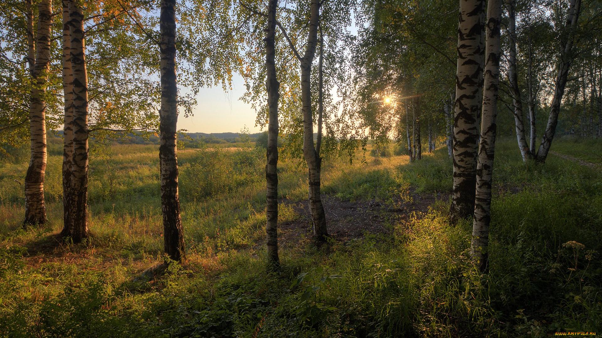 картинки лесные просторы нему пару