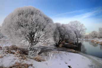 Картинка природа зима лес