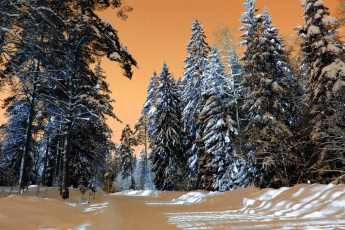 Картинка природа зима снег лес