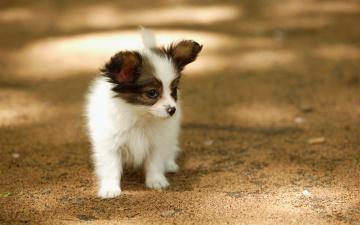 Картинка животные собаки собака щенок