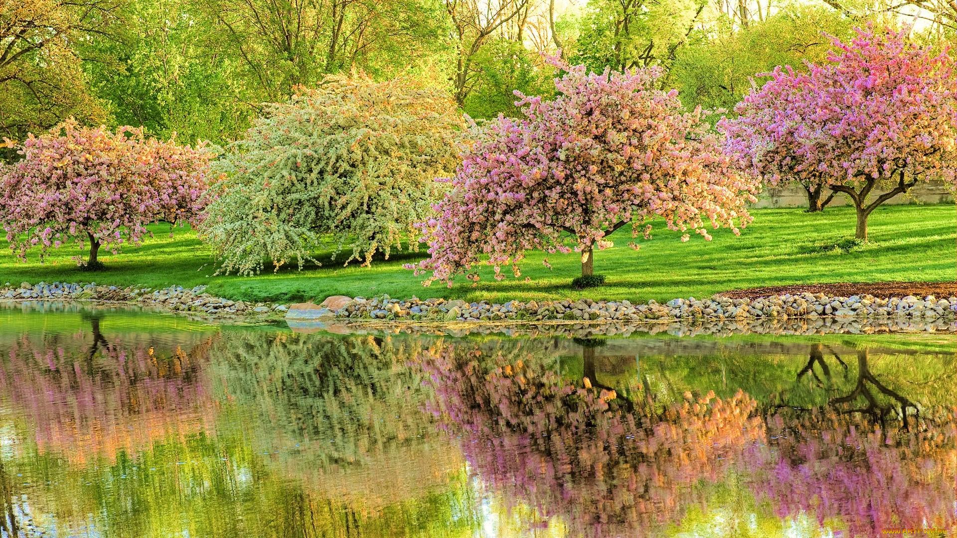 Оформить, картинки красивая природа весна