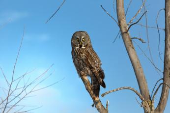 Картинка животные совы сова птица дерево ветки