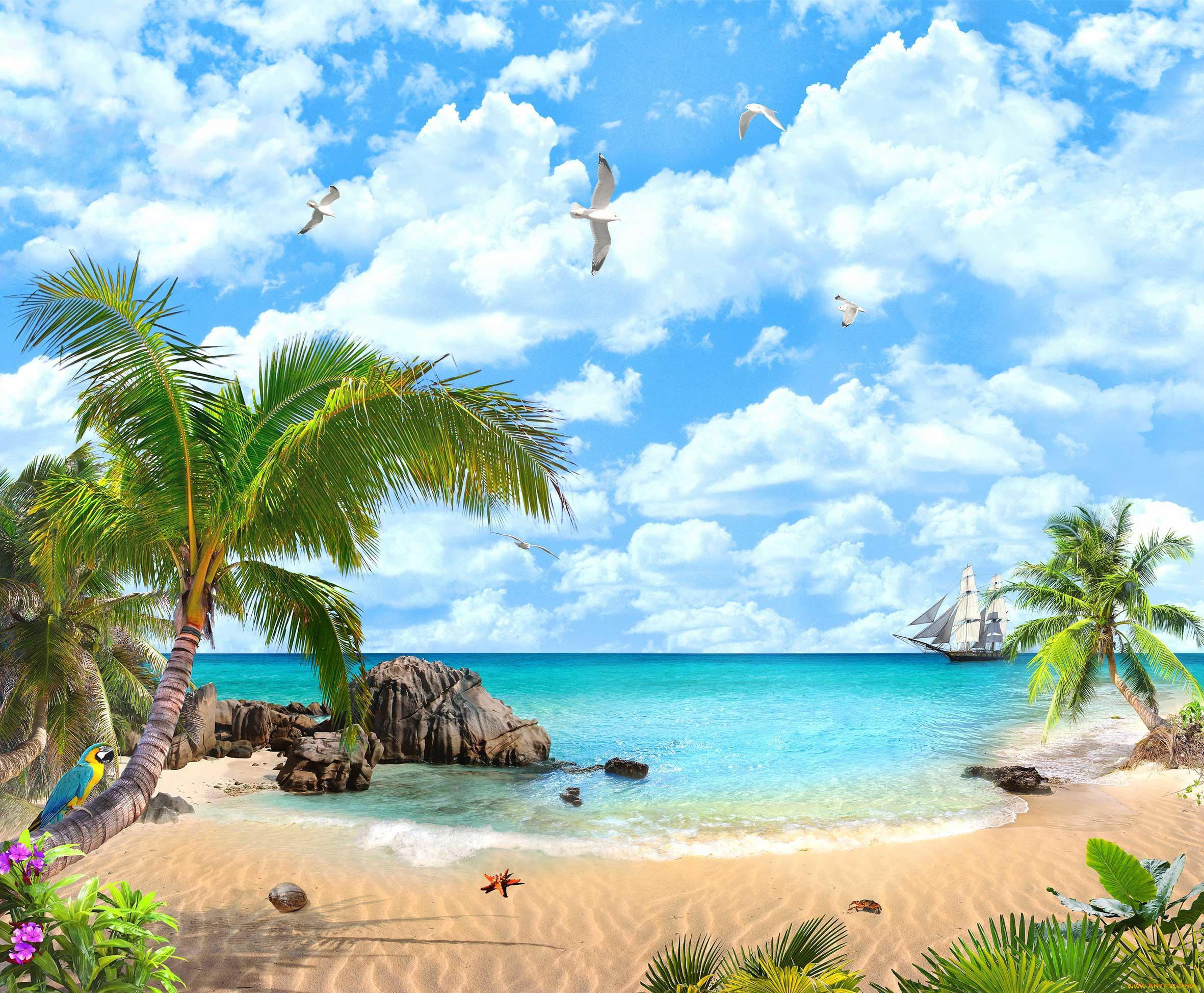 Море пальмы открытка, месяц открытка